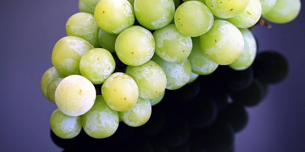 ¿Cómo congelar frutas y verduras?